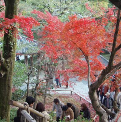 紅葉のお寺
